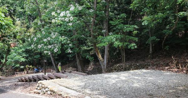 《彰化.芬園》德興社區桐花廣場鋪上滿滿的桐花毯,還有百年德興古井