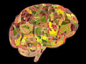 脳を(素材)