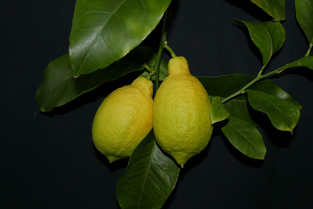 Pavlovskiy lemon