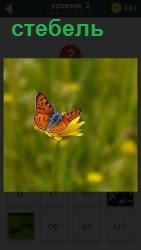 800 слов красивая бабочка сидит на стебле 3 уровень