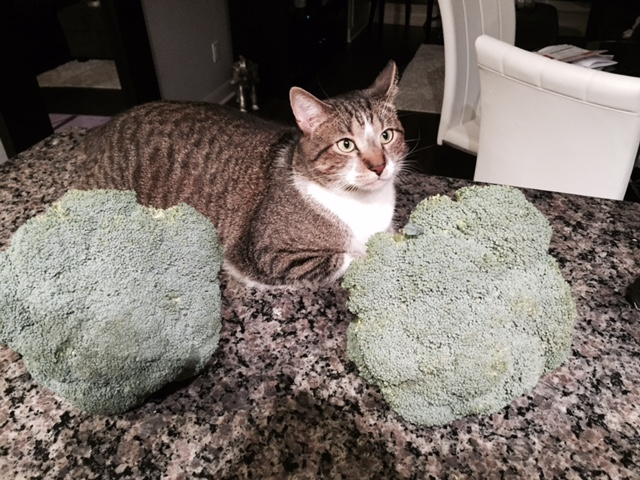 Should Cats Eat Broccoli