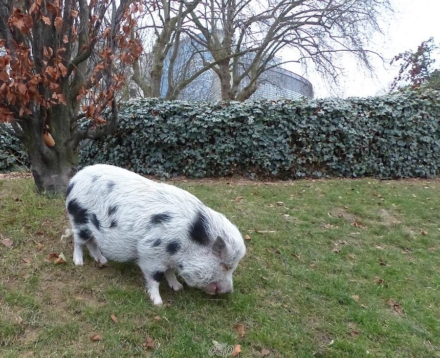C o nom d 39 un chien rencontre for Le jardin tino rossi