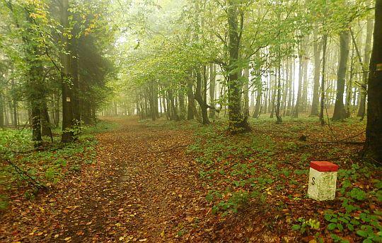 Znów wchodzimy do lasu ogarniętego delikatnym woalem.