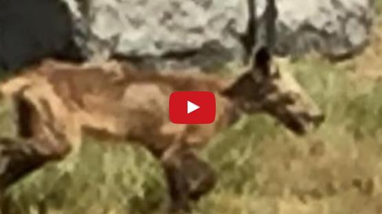 Mysterious And Strange Animal spotted Wandering In New Hampshire Cemetery. Watch This Video