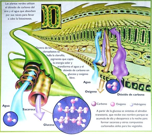 1001 PORQUÉ: ¿Qué es la fotosíntesis?