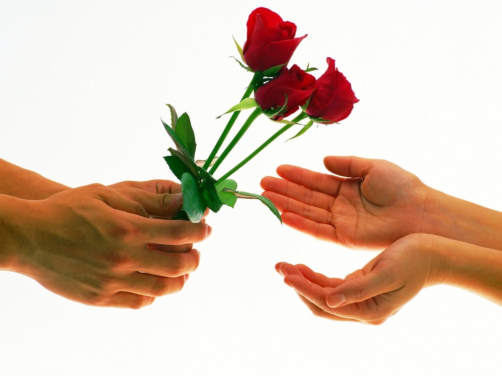 Valentine 39 s week 2013 rose day propose day chocolate day - Boy propose girl with rose image ...