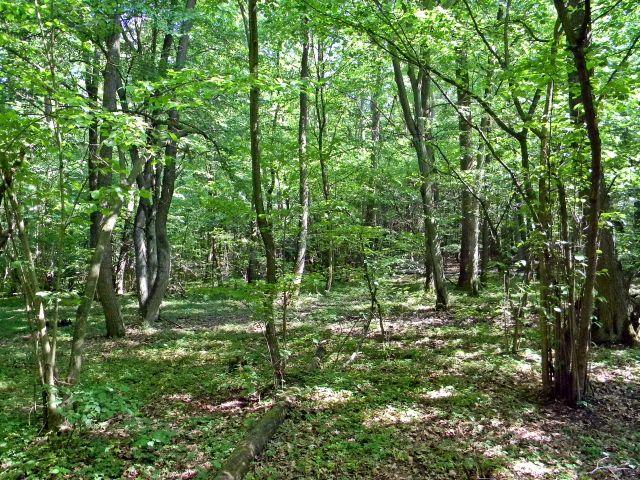 rezerwat przyrody, natura, drzewa, lasy