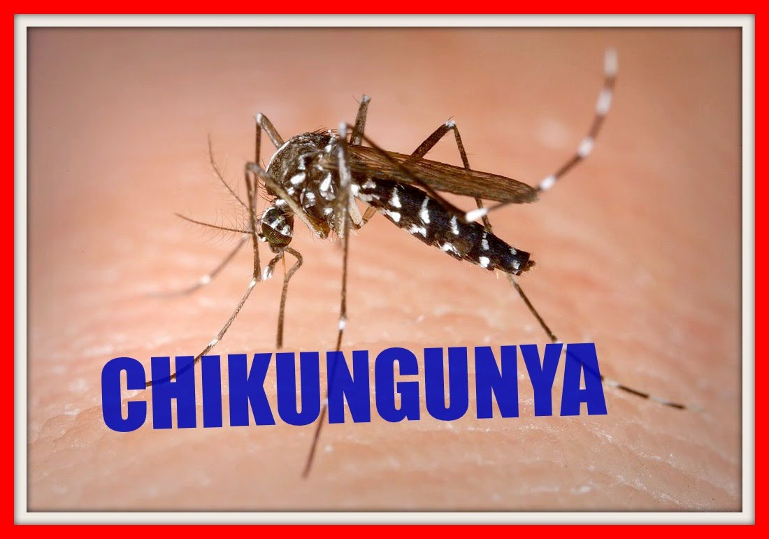 chikungunya is a disease that is A crippling mosquito-borne virus with a tongue-twisting name -- chikungunya -- has spread to the caribbean, and us travelers have brought it home to at least 10 states.