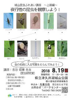 8/19  城山昆虫ふれあい講座~上級編~ 夜行性の昆虫を観察しよう!