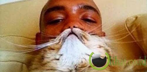 Kumis kucing atau kumis mainan?