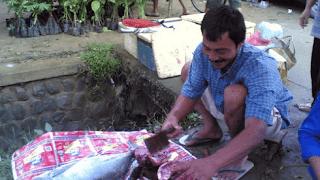 Potensi hasil laut nelayan Sidomulyo Ngadirojo Pacitan