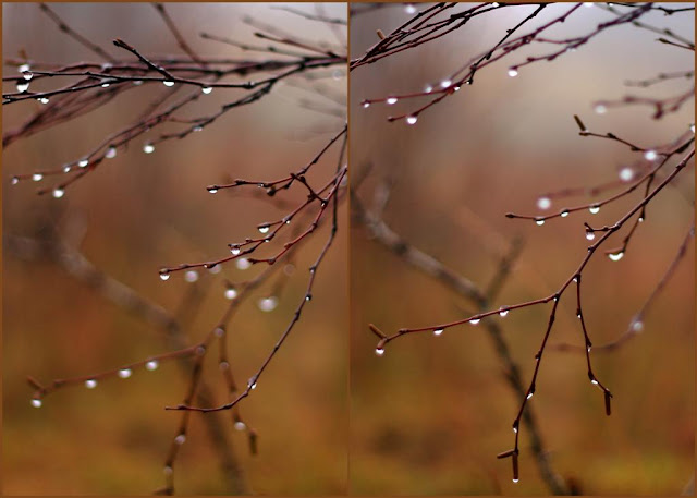 tree branches and raindrops collage
