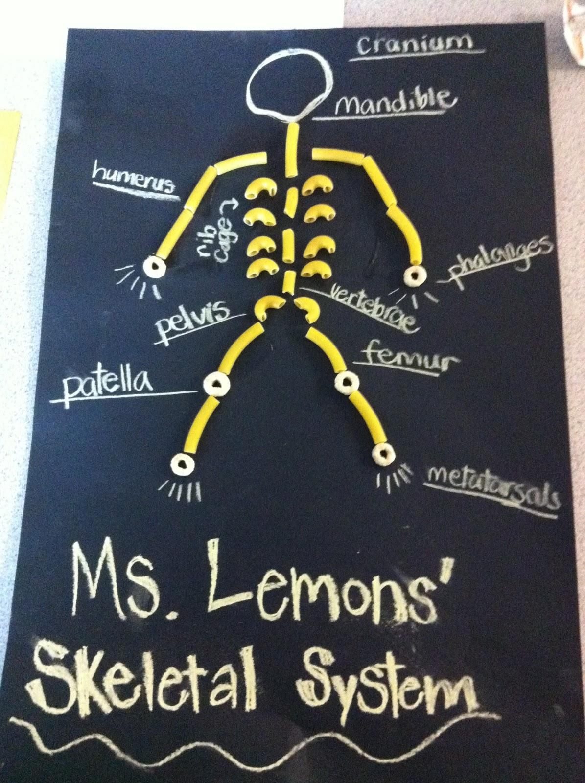 Skeleton Diagram For 4th Grade Wiring Car Alternator Now What Ms Lemons September 2012