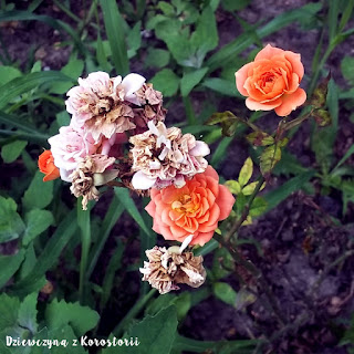 dziewczynazkorostorii.blogspot.com