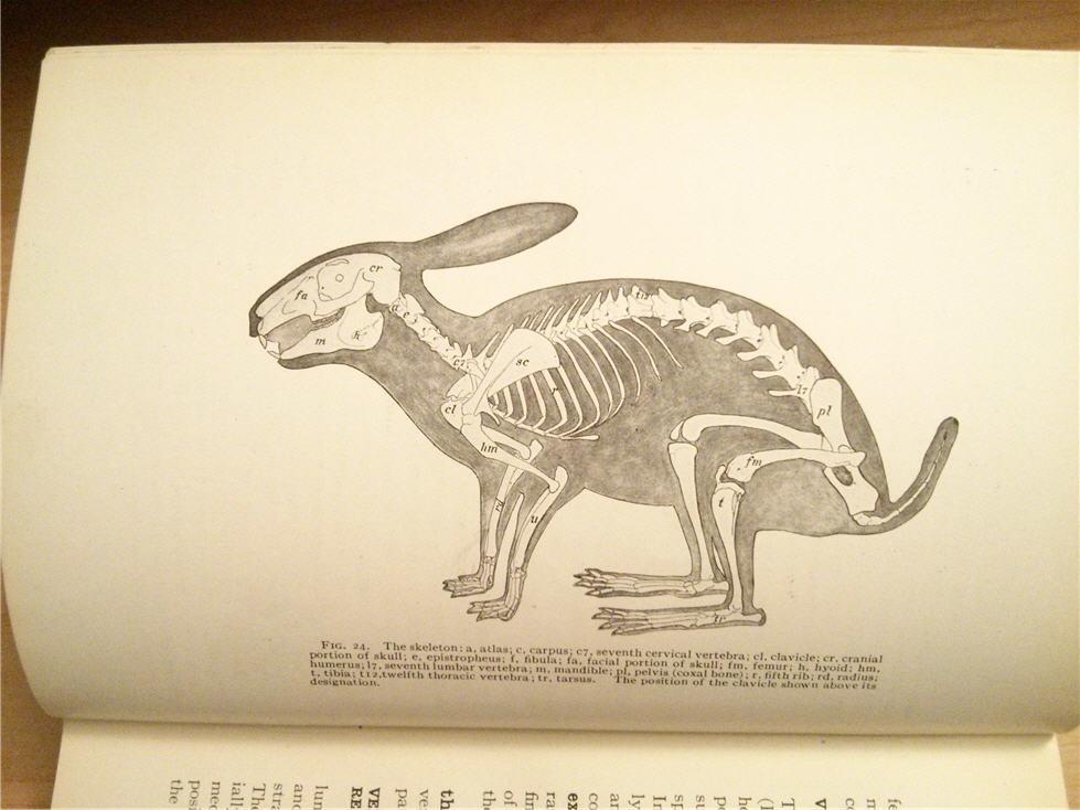 The Random Book Machine: W36: Practical Anatomy of the Rabbit
