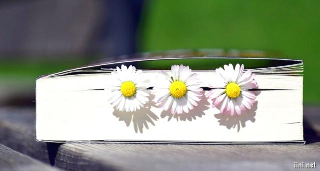 ảnh những cánh hoa nhỏ dễ thương và sách