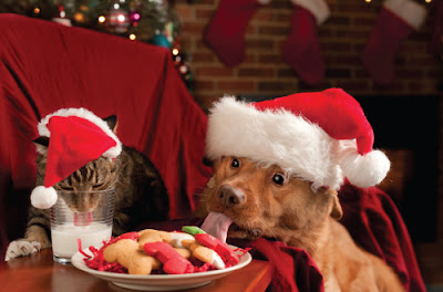 cat and dog wearing santa hats eating christmas food