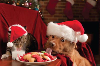 cat and dog wearing santa hats eating christmas food