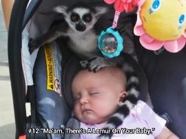 Bayi dimakan kukang