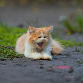Cara Memandikan Kucing Yang Benar Dirumah Sendiri