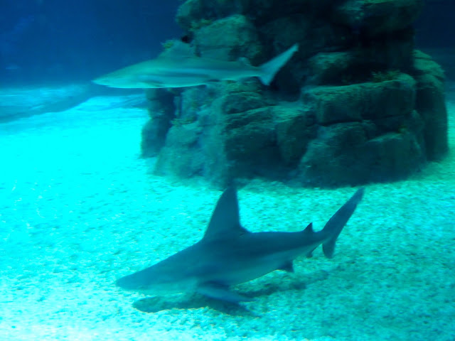 Shark Mystique, Ocean Park, Hong Kong