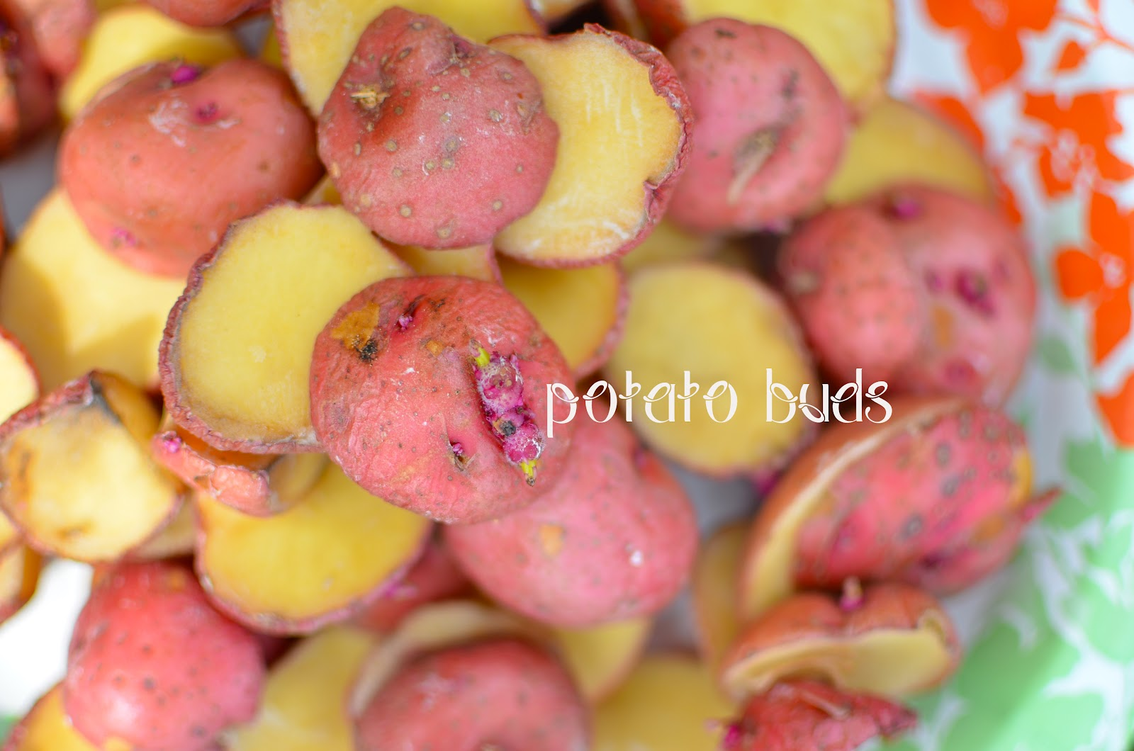 Grow Potatoes in tires Easily