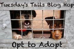 Opt to adopt graphic