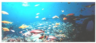pemandangan dalam laut…kehidupan dalam laut