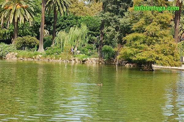 Al llac hi habiten ànecs, peixos i tortugues aquàtiques