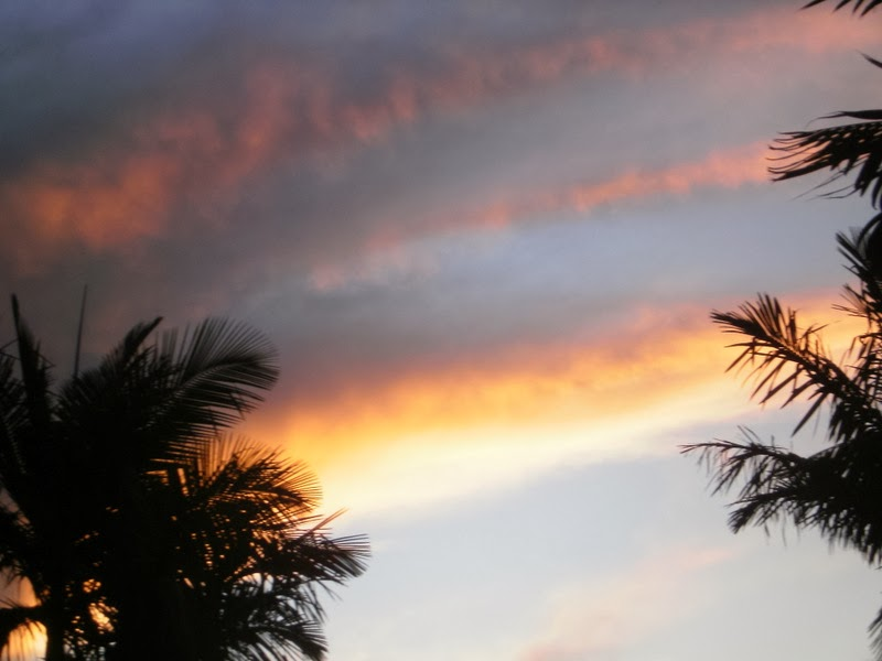 cloudy sunset sky  with palms