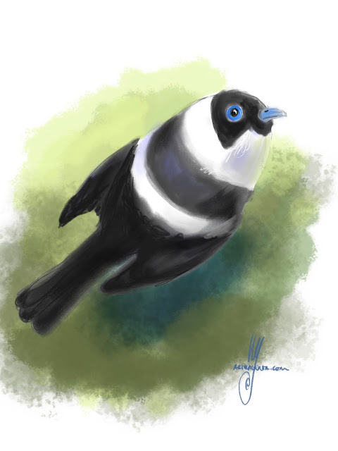Pied monarch Bird painting by Ulf Artmagenta