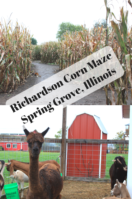 Tackling the World's Largest Corn Maze and Enjoying Fall Farm Fun at the Richardson Corn Maze in Spring Grove, Illinois