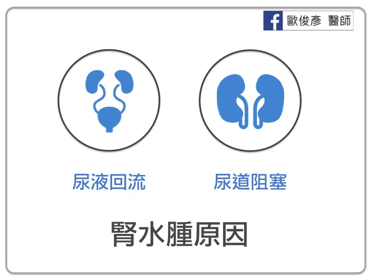 腎臟水腫的原因