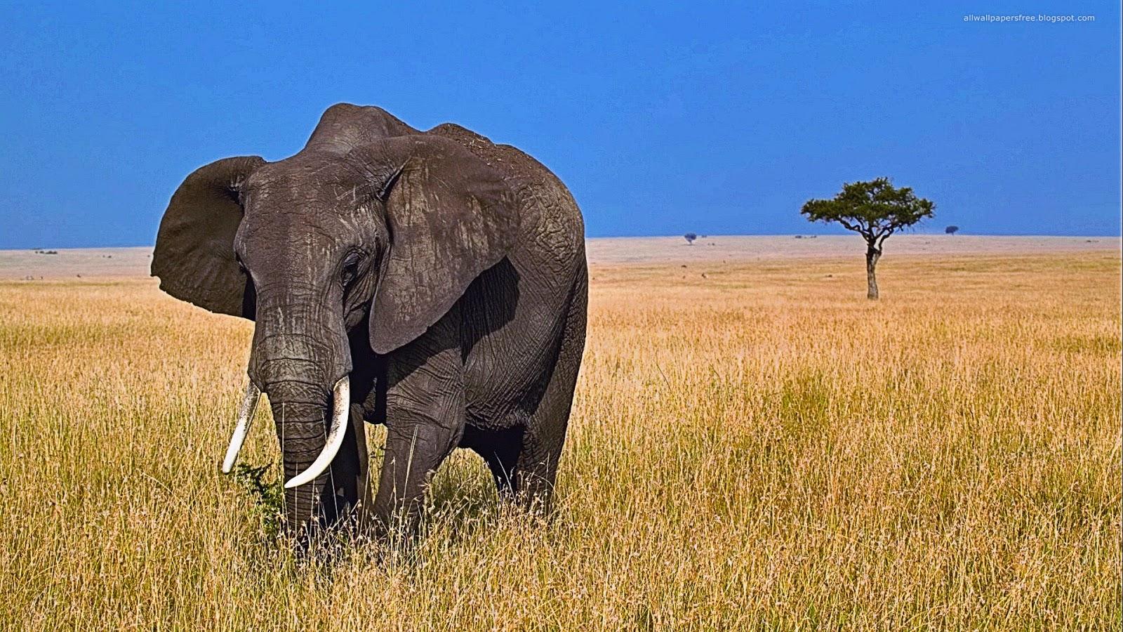 wild animals photos with names pdf
