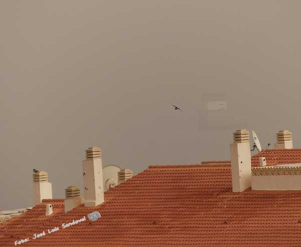 fotos calima Gran canaria, miércoles 28 marzo