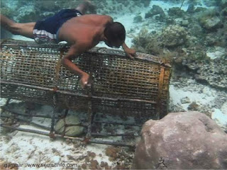 Banyak Permintaan akan ikan segar dan semaki ketatya peggunaan alat tangkap yang di perbo Kabar Terbaru- ALAT TANGKAP BUBU