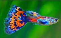 Motivasi: Ikan Kecil Dan Air