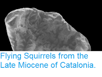 http://sciencythoughts.blogspot.co.uk/2015/05/flying-squirrels-from-late-miocene-of.html