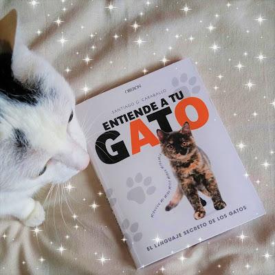entiende-gato-lenguaje-secreto