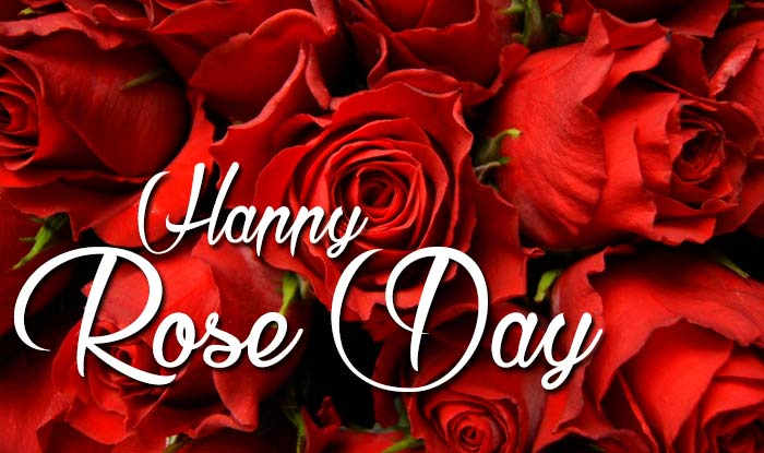 rose day all images
