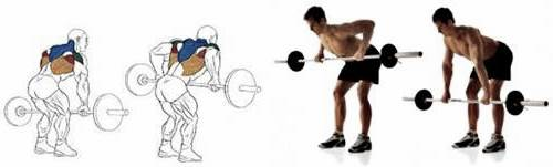 Standing Row with barbell