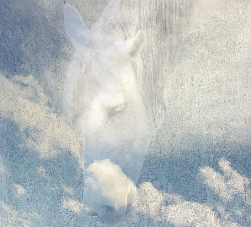 """Арт фотография из серии """"Облачные лошадки"""". Фотограф Цуриков Илья"""
