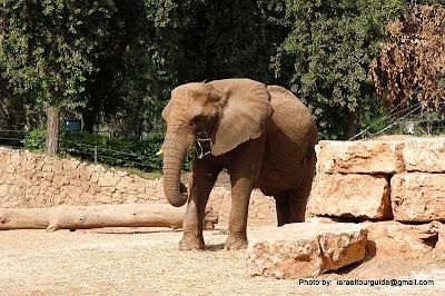 Зоологический центр Сафари в Рамат-Гане