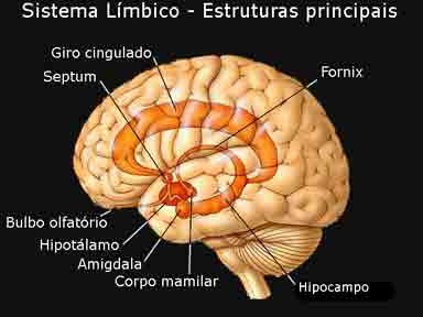 en que consiste el hipocampo