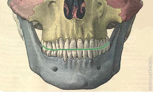 Граница между средним и нижним этажами лицевого черепа.