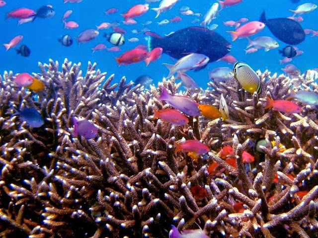 Keindahan bawah laut Menjangan kecil