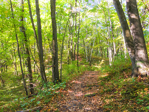 Ice Age Trail Greenbush Segment