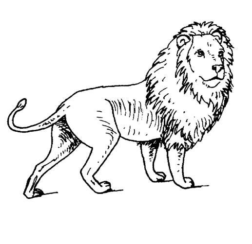 Coloriages A Imprimer Dessin Lion