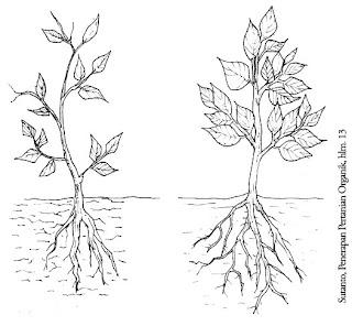 sistem perakaran tanaman