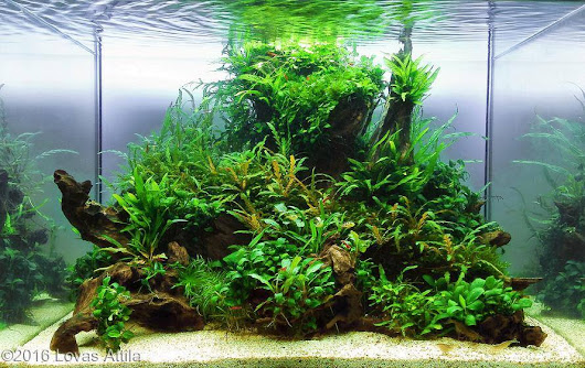 Kontes AGA 2016, Aquatic Garden, 120L ~ 200L September